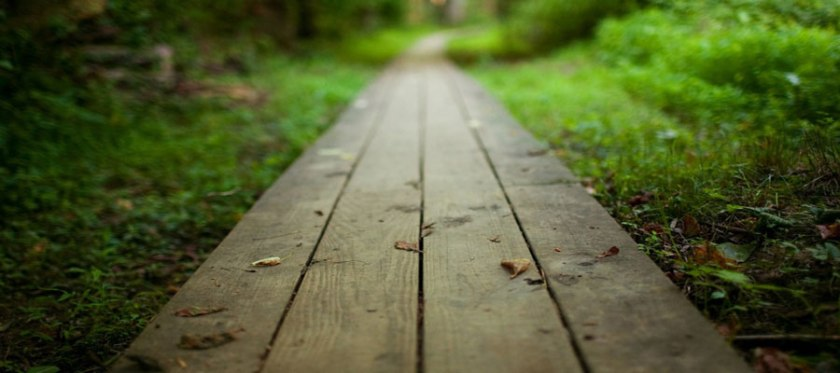 wooden_path_900x400
